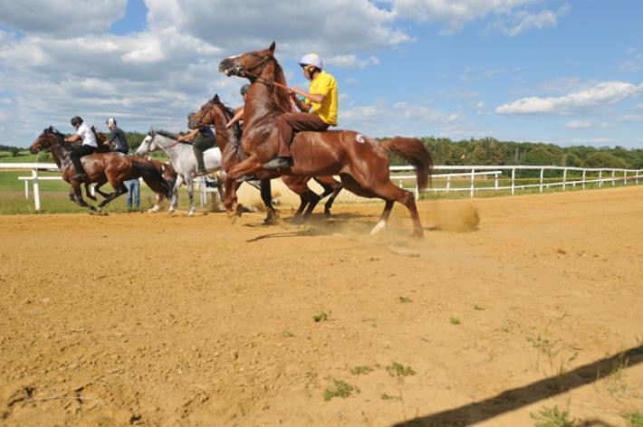17 maggio: lavori di addestramento cavalli a Mociano