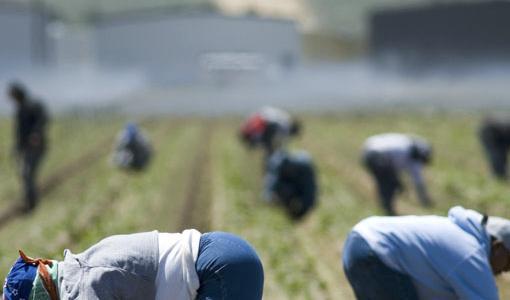 Lavoro: tre arresti per caporalato a Siena e Grosseto