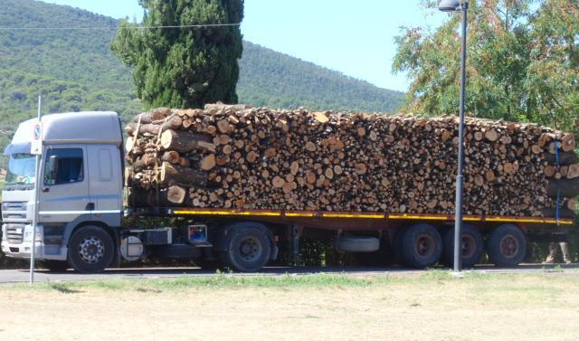 Italia Nostra denuncia lo scempio degli alberi