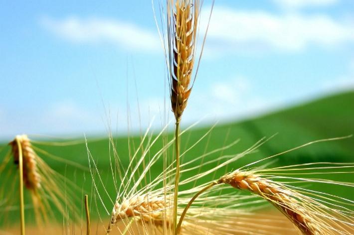 Agricoltura di precisione: un confronto con le aziende