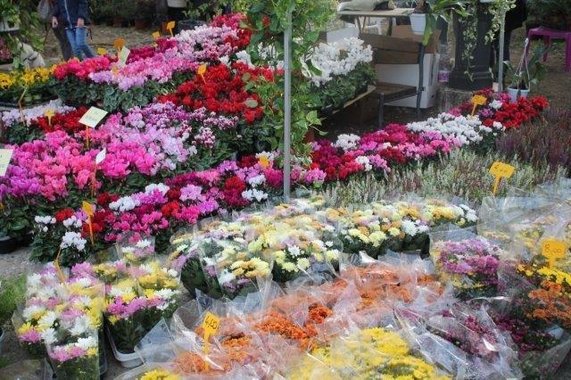 siena in fiore autunno 27 - 28 ottobre 2018 (7)